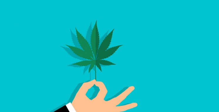 Medyczna marihuana – hit czy kit?