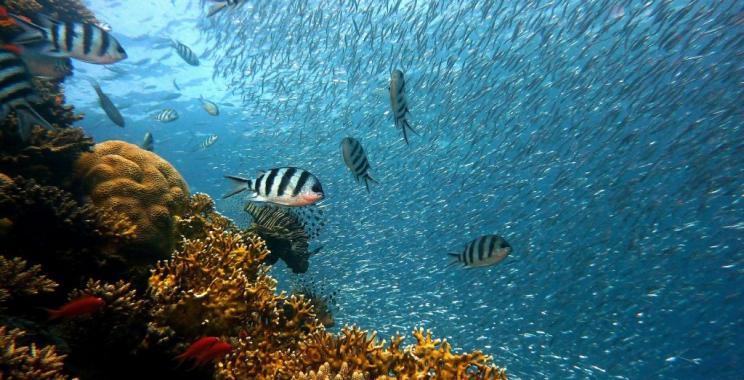 Raj dla spragnionych przygody turystów, Malediwy.